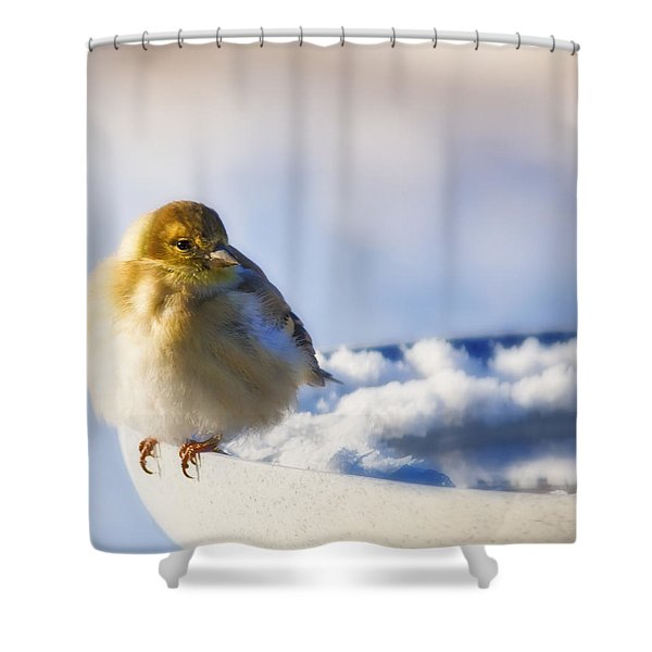 Cold American Goldfinch Shower Curtain