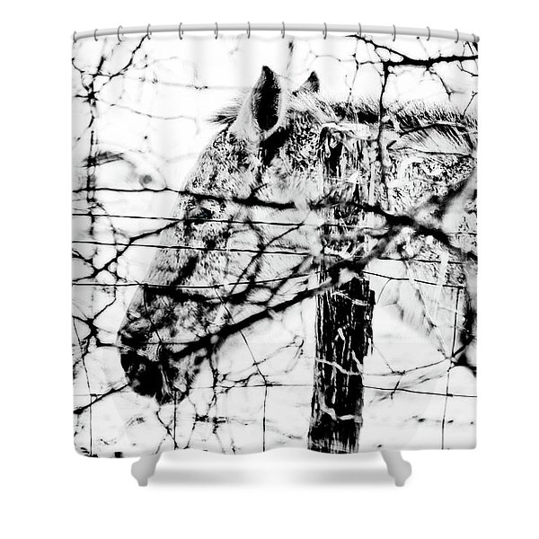 Cold Horse Shower Curtain