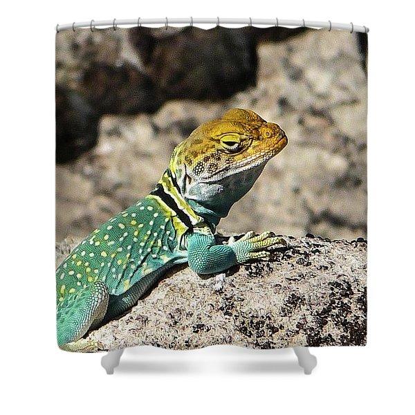 Collared Lizard Shower Curtain