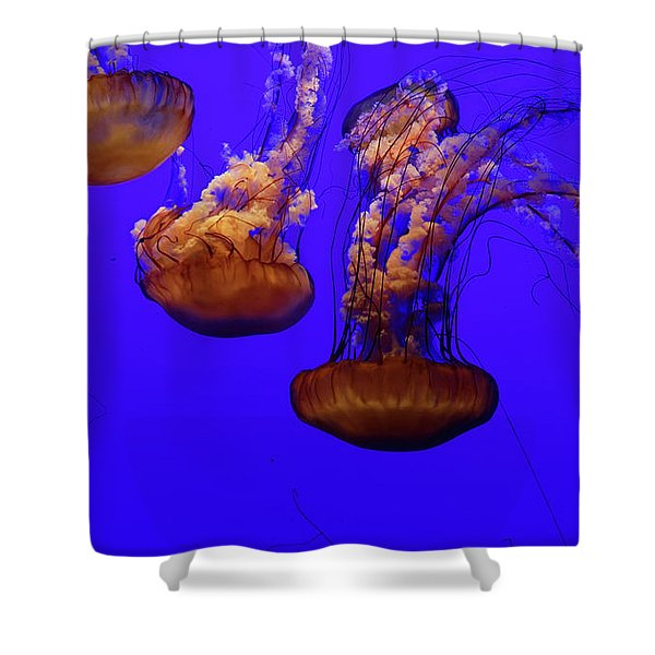 Collection Of Jellyfish Shower Curtain