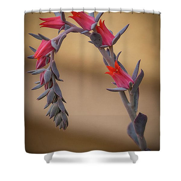 Color And Curve Shower Curtain