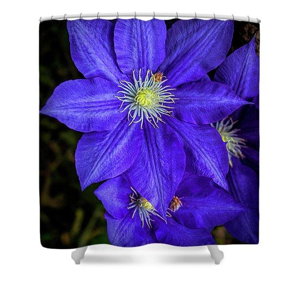Color Me Purple Shower Curtain