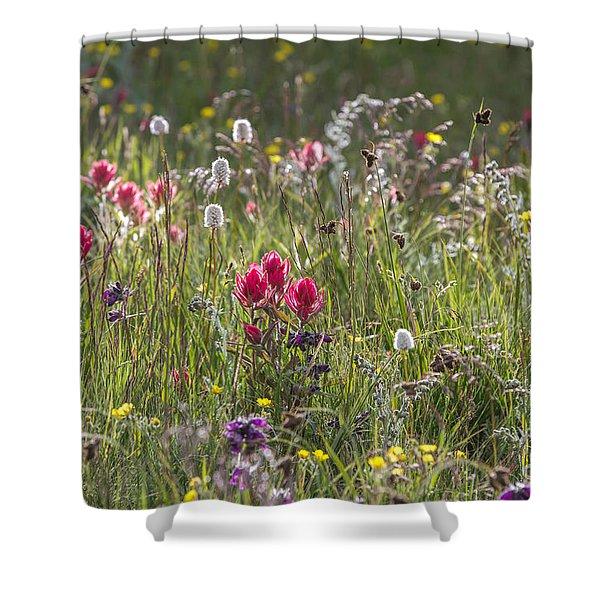 Colorado Alpine Flowers Shower Curtain