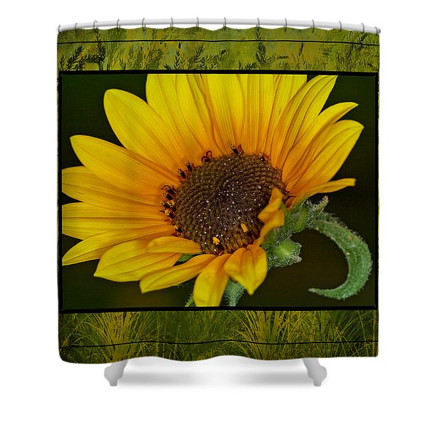 Colorado Sunflower Shower Curtain