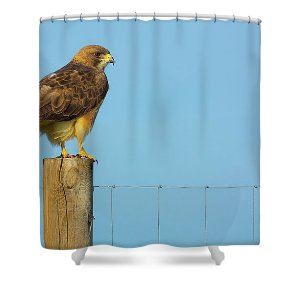 Shower Curtain featuring the photograph Colorado Swainson's Hawk Perched by John De Bord