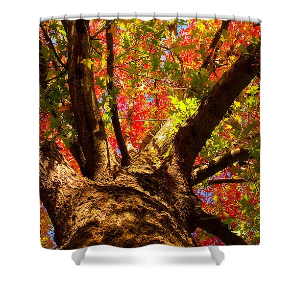 Colorful Autumn Abstract Shower Curtain