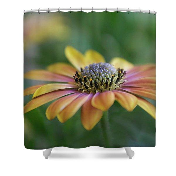 Colorful Daisy Shower Curtain