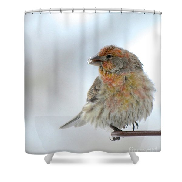 Colorful Finch Eating Breakfast Shower Curtain