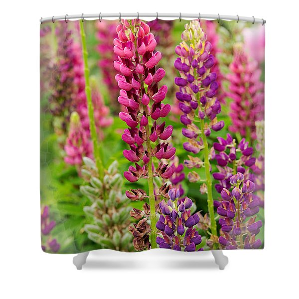 Colorful Lupine Shower Curtain