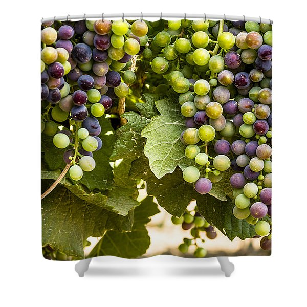 Colorful Red Wine Grape Shower Curtain