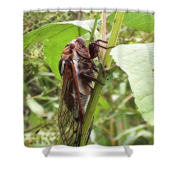 Colorful Summer Cicada Shower Curtain