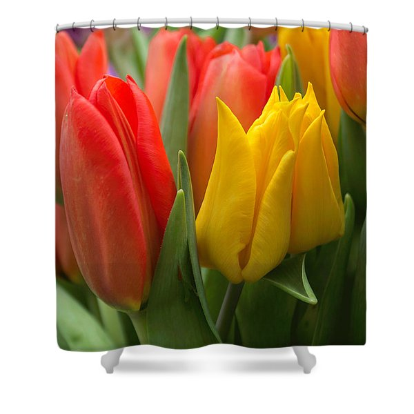 Colorful Tulip Bouquet Shower Curtain