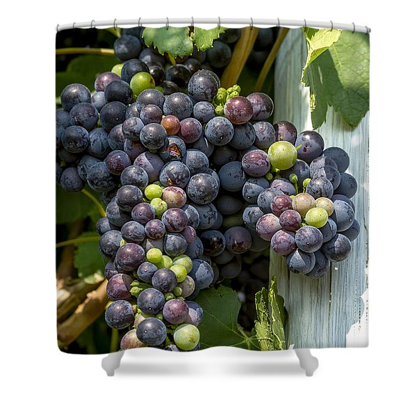 Colorful Wine Grapes On Grapevine Shower Curtain