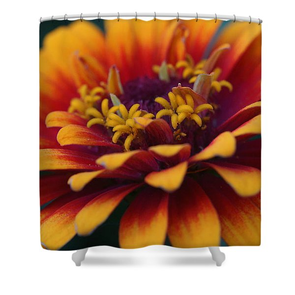 Colorful Zinnia 1 Shower Curtain