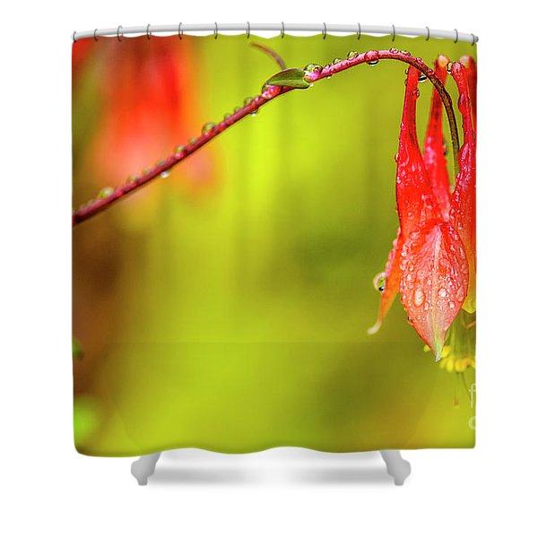 Columbine In The Rain Shower Curtain