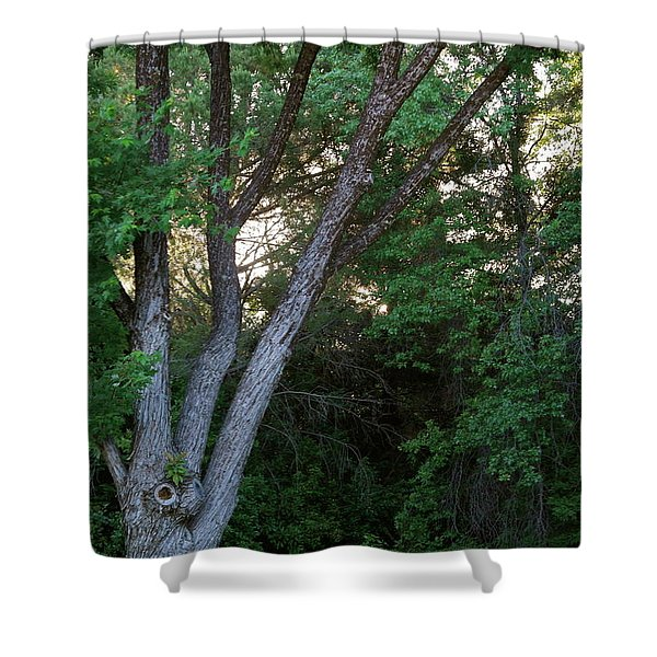 Comes The Dawn Shower Curtain