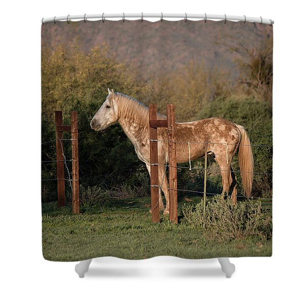 Coming Through The Fence Shower Curtain