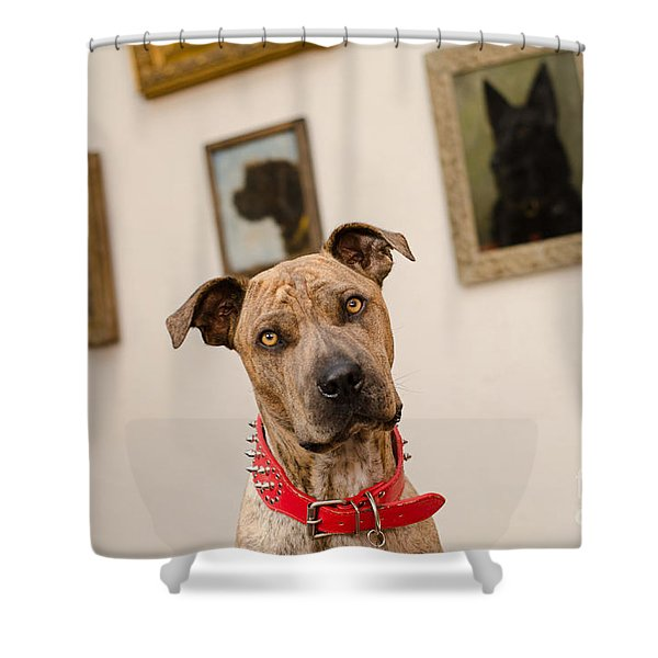 Commodor Shower Curtain