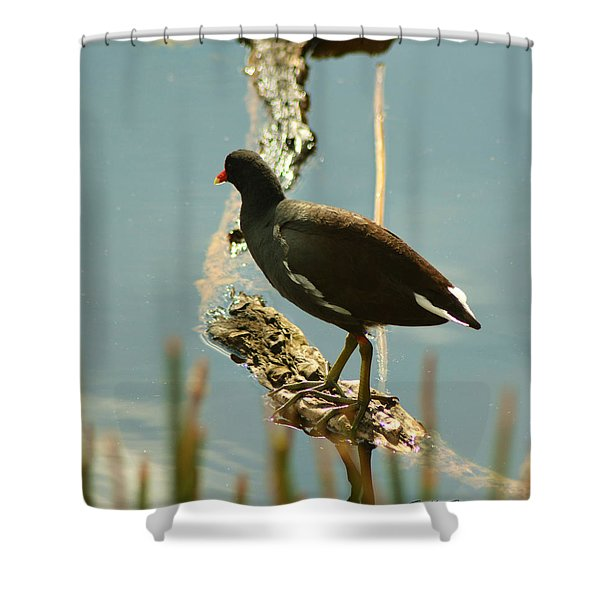 Common Moor Hen Shower Curtain