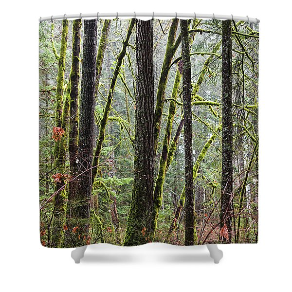 Comox Valley Forest-1 Shower Curtain