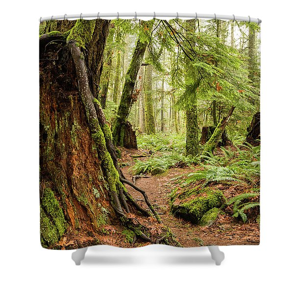 Comox Valley Forrest-3 Shower Curtain
