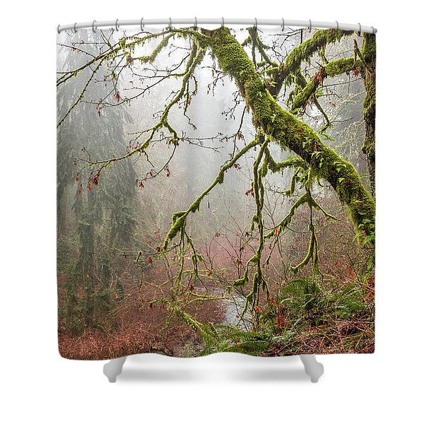 Mist In The Forest Shower Curtain