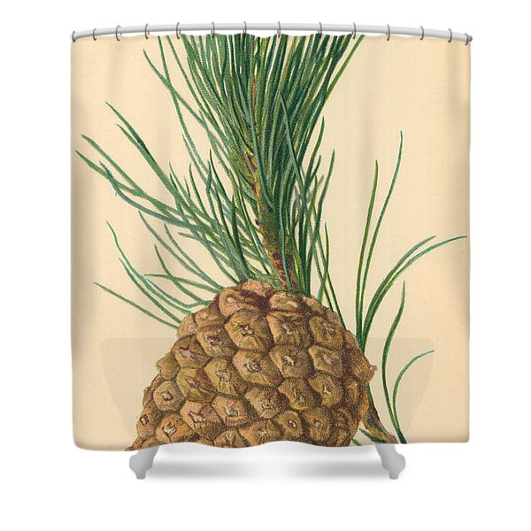 Cone Of Stone Pine Shower Curtain