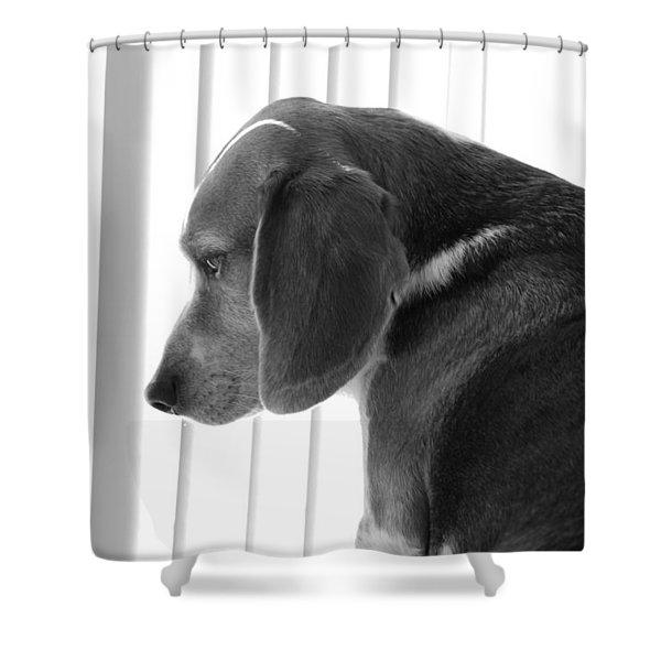 Contemplative Beagle Shower Curtain
