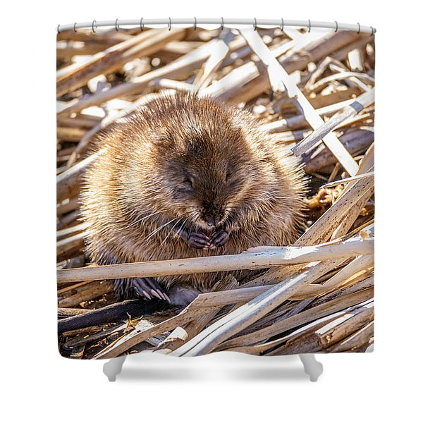 Content Mildred Shower Curtain