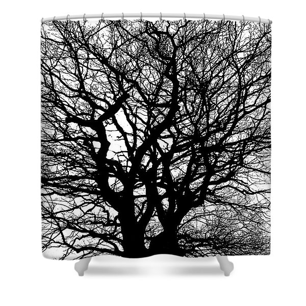 Contrast Shower Curtain