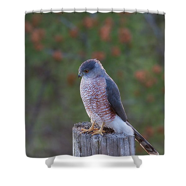 Coopers Hawk Perched Shower Curtain