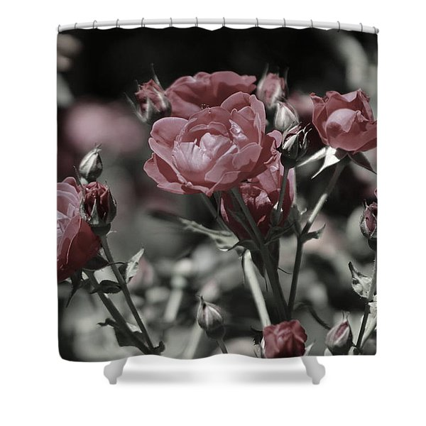 Copper Rouge Rose In Almost Black And White Shower Curtain