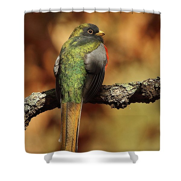 A Coppery-tailed Elegant Trogon Shower Curtain