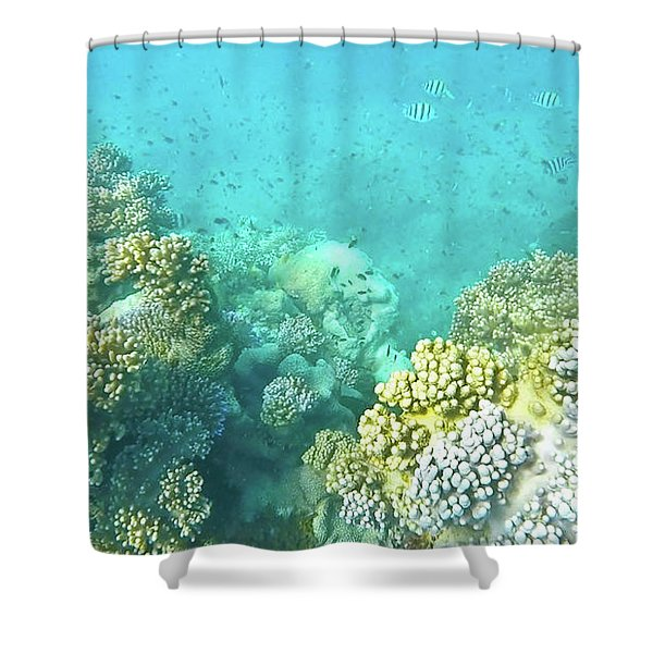 Shower Curtain featuring the photograph Coral by Debbie Cundy