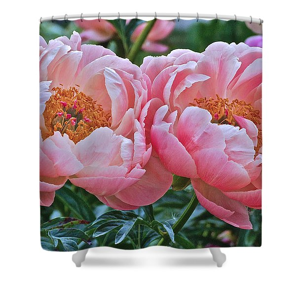 Coral Duo Peonies Shower Curtain