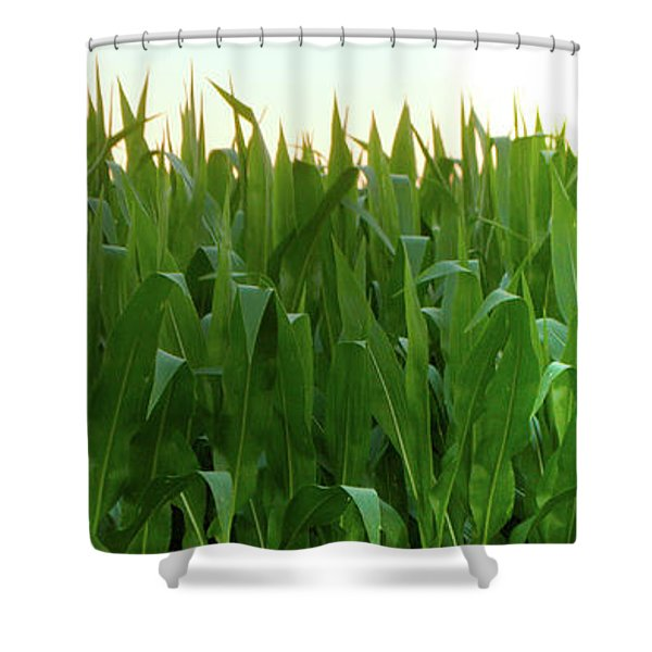 Corn Of July Shower Curtain