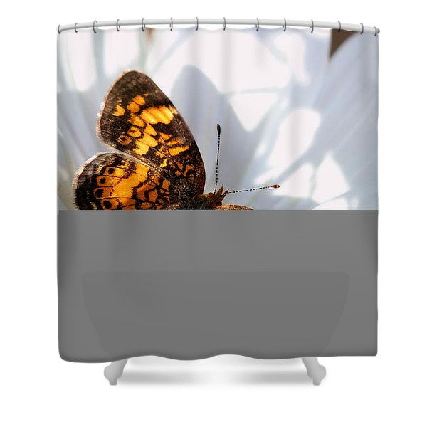 Pearl Crescent Butterfly On White Cosmo Flower Shower Curtain
