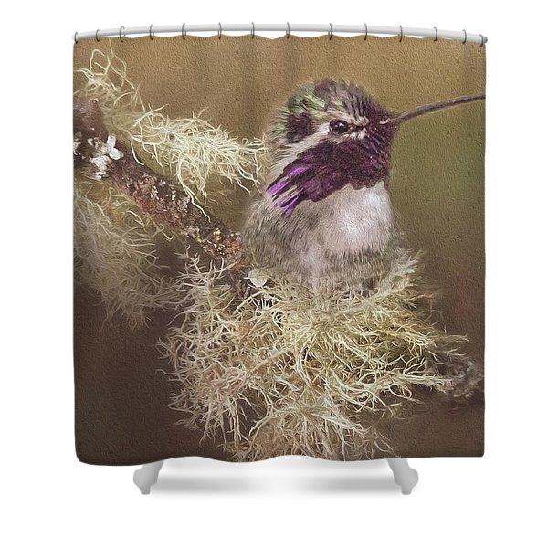 Costas Hummingbird Painted Shower Curtain
