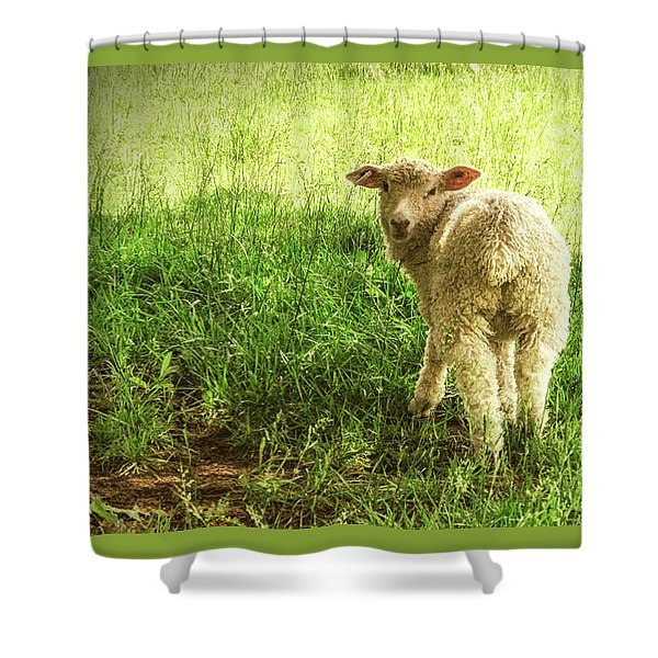 Cotswold Sheep Shower Curtain