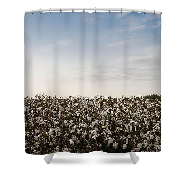 Cotton Field 2 Shower Curtain