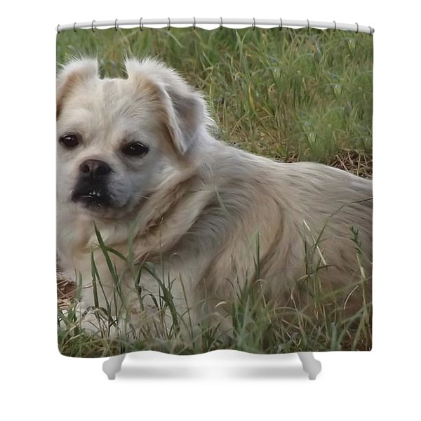 Cotton In The Grass Shower Curtain