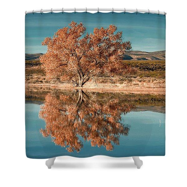Cotton Wood Tree  Shower Curtain