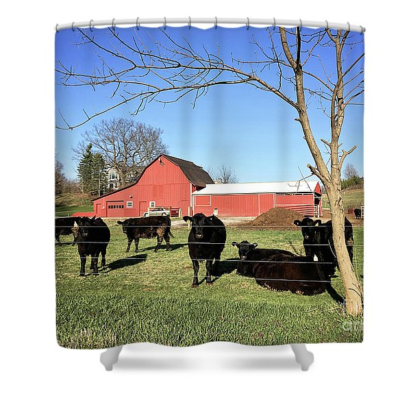 Country Cows Shower Curtain