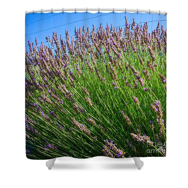 Country Lavender I  Shower Curtain