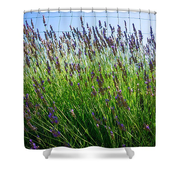 Country Lavender II Shower Curtain