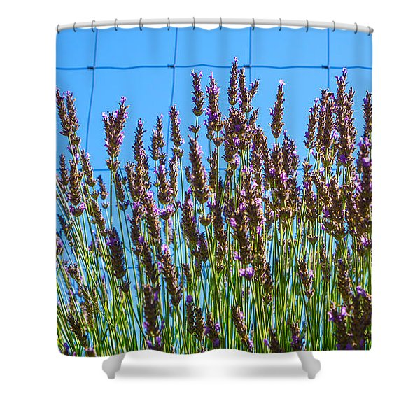 Country Lavender IIi Shower Curtain