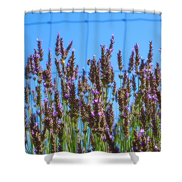 Country Lavender Iv Shower Curtain