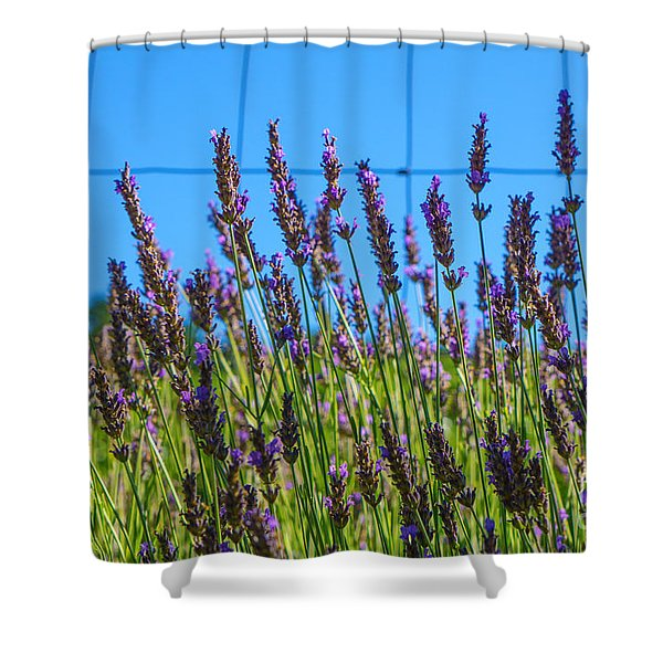 Country Lavender Vii Shower Curtain
