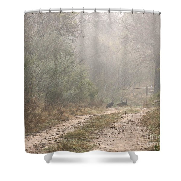 Country Road In The Morning Shower Curtain