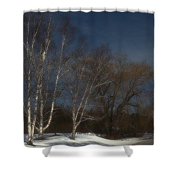 Country Roadside Birch Shower Curtain
